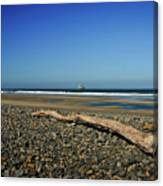 Beach Driftwood Canvas Print