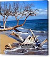Beach Driftwood Fine Art Photography Canvas Print