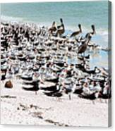 Beach Flock Canvas Print