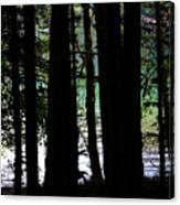 Beach Forest Canvas Print