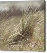 Beach Gras Canvas Print