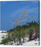 Beach Grass 3 Canvas Print