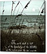 Beach Grass Oats Isaiah 11 Canvas Print