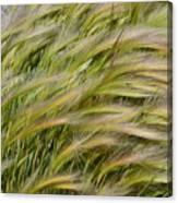 Beach Grasses Canvas Print