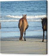 Beach Horses Canvas Print