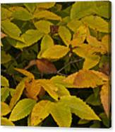 Beach Leaves Canvas Print
