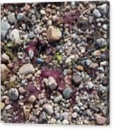 Beach Pebbles Canvas Print