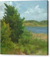 Beach Pines Canvas Print