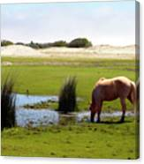 Beach Pony Canvas Print