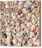 Beach Seashells Canvas Print