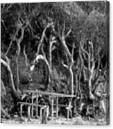 Beach Trees Canvas Print