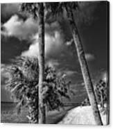 Beach Walk - Port Charlotte Beach Park, Florida Canvas Print