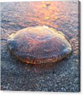 Beached Jellyfish Canvas Print