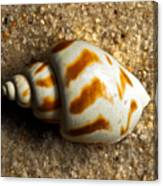 Beached Shell Canvas Print