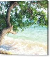 Beachscape Tree Canvas Print