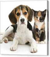 Beagle And Calico Cat Canvas Print