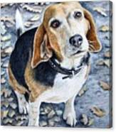 Beagle Nanni Canvas Print