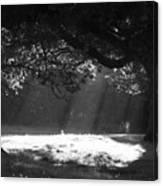Beams Of Light Canvas Print