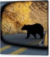 Bear Chance Canvas Print