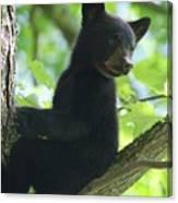 Bear Cub In Tree Canvas Print
