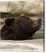 Bear Dip Canvas Print