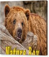 Bear Nature Boy Canvas Print