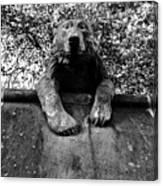 Bear On The Wall Canvas Print