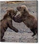 Bear Play Canvas Print