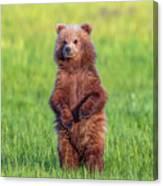Bear Standing Tall Canvas Print