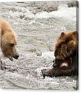 Bear Watches Another Eat Salmon In River Canvas Print