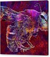 Bearded Bee Macro Insect Nature  Canvas Print
