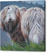 Bearded Collie In Field Canvas Print
