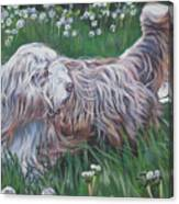 Bearded Collie Canvas Print