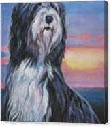 Bearded Collie Sunset Canvas Print