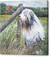 Bearded Collie With Cardinal Canvas Print
