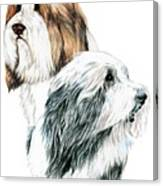Bearded Collies Canvas Print