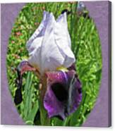 Bearded Iris Blossom Canvas Print