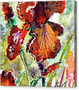 Bearded Iris Brown Sally Watercolor Canvas Print