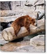 Bearly Relaxing Canvas Print