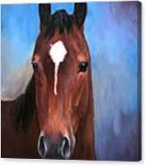Beau  Quarter Horse Portrait Canvas Print