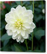 Beautiful And Fresh Dahlias In The Butchrt  Gardens,vancouver Island 3. Canvas Print