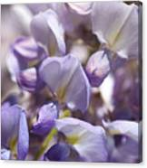 Beautiful And Magical Wisteria  Canvas Print