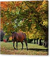 Beautiful Bay Horse In Fall Canvas Print