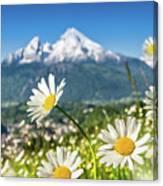 Beautiful Blooming Flower Panorama Canvas Print