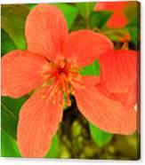 Beautiful Blossom Canvas Print