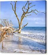 Beautiful Botany Bay Beach  Canvas Print