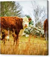 Beautiful Bovine 2 Canvas Print