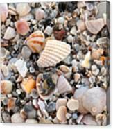 Beautiful Broken Shells Canvas Print
