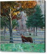 Beautiful Brown Horse Canvas Print