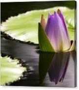 Beautiful Bud Reflection Canvas Print